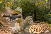 squirrel army nuts
