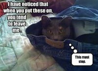 Funny Cat in Jeans
