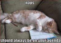 Kitty Nap Time