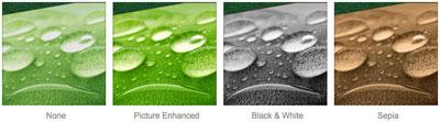 Greenleaf Canvas Effect