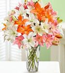 Vibrant Summer Lilies
